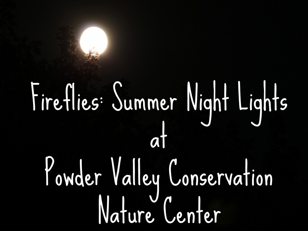 Fireflies at Powder Valley