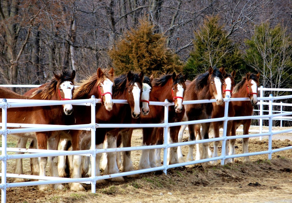 WSR-Yearlings-1024x712