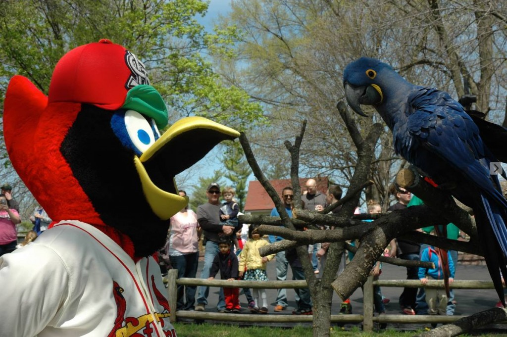 Fredbird at Grant's Farm