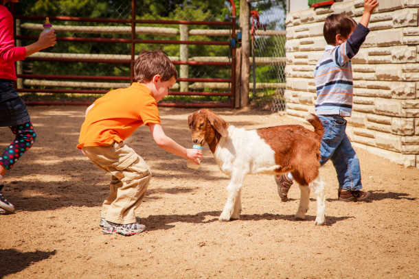 Grants-Farm-Goat-Feedings-610x407
